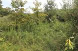 7622 W Becks Grove~2D Lot 3, Freetown, IN 47235
