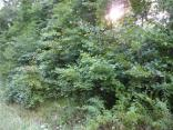 Lot 11  State Road 243, Cloverdale, IN 46120